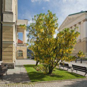 UW Main Campus.