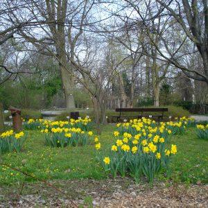 The UW Botanic Garden.