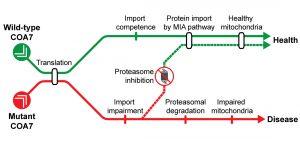 Credit: EMBO Molecular Medicine